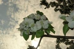 cvety_1