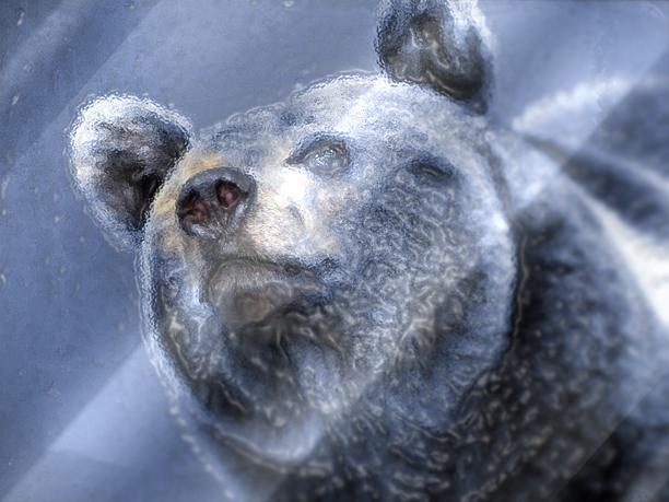медведь21