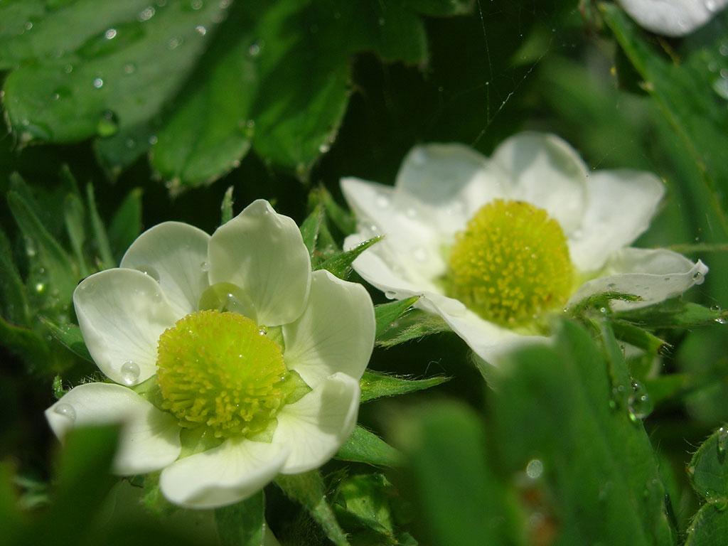 cvety_1-1