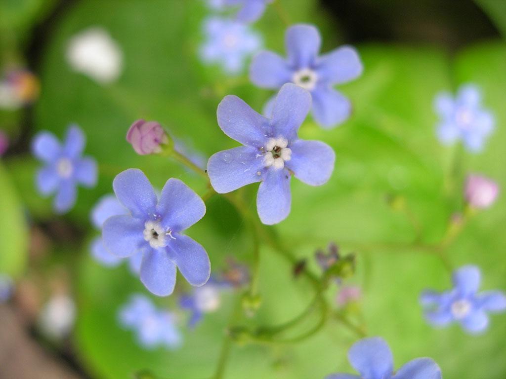 cvety_4