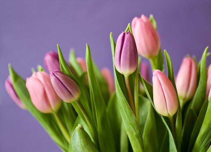 Как составить красивый букет из тюльпанов?